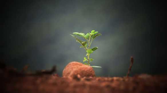 plant-seedling-soil-earth